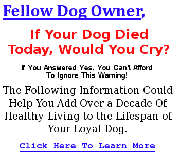 dogfoodsecrets